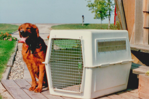 A Car Kennel As A Training Tool
