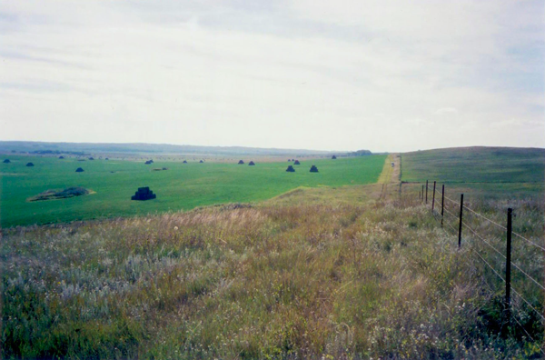 Labs and Sharptails on the North Dakota Prairie