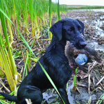 Energy For Hunting Dogs