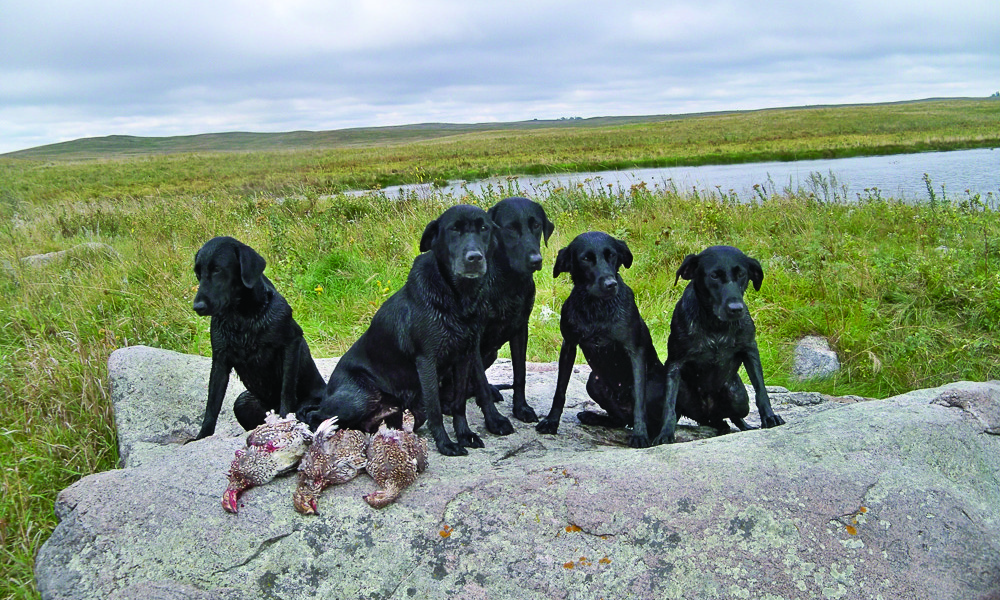 Gun Dogs and Land Trapping