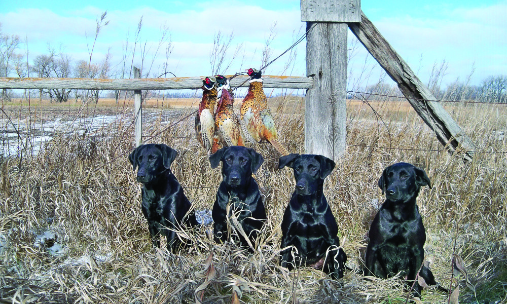 Dog Energy Snacks Key to Canine Stamina