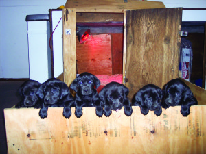 Puppy Growth It's Like Clockwork